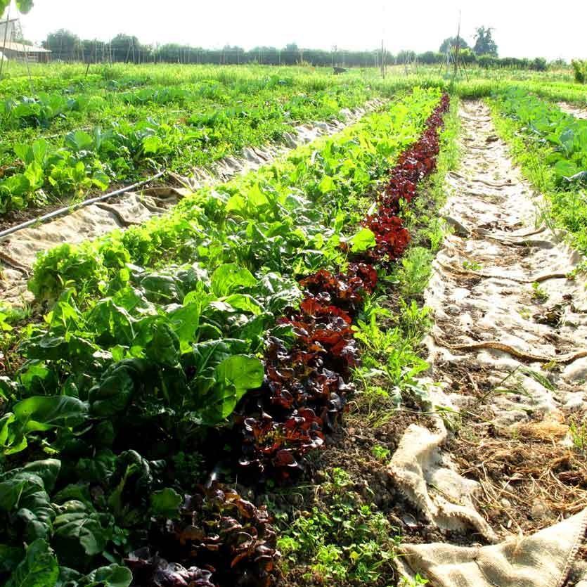 Concime biologico per orto