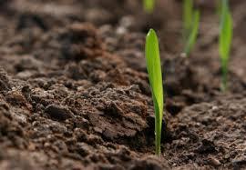 Rigenerazione del suolo