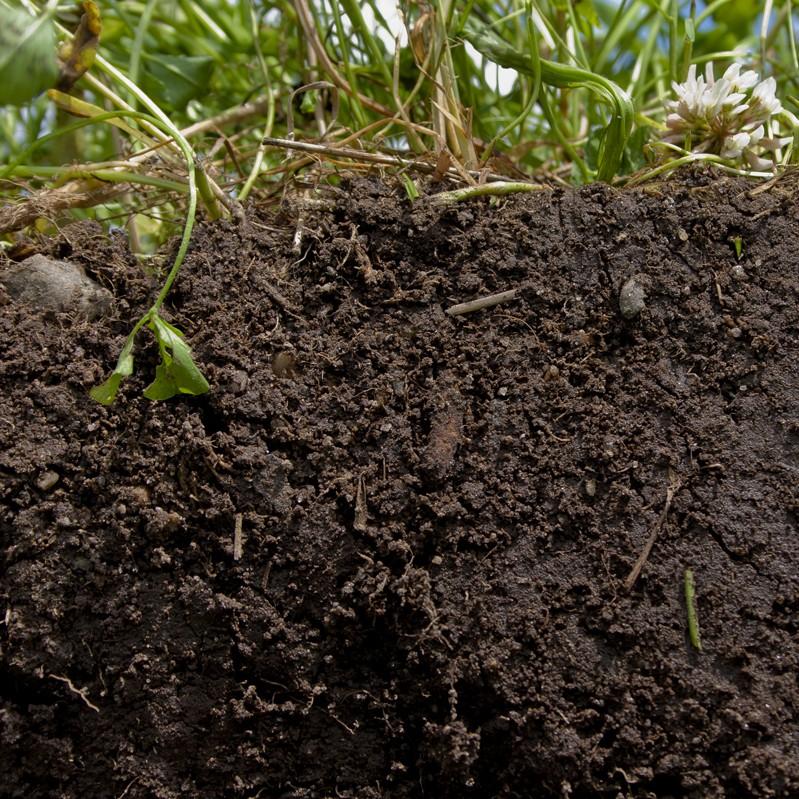 Rigenerazione del terreno